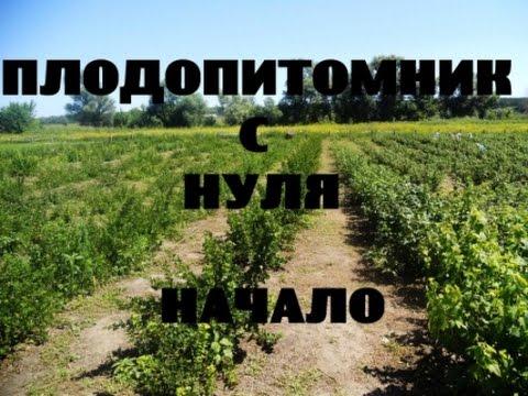 ПЛОДОПИТОМНИК с нуля. Начало #1 // КХ Алексеевых