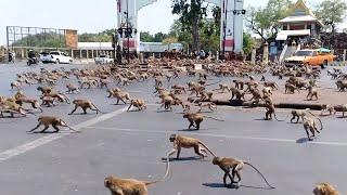 Массовое Вторжение Животных в Города