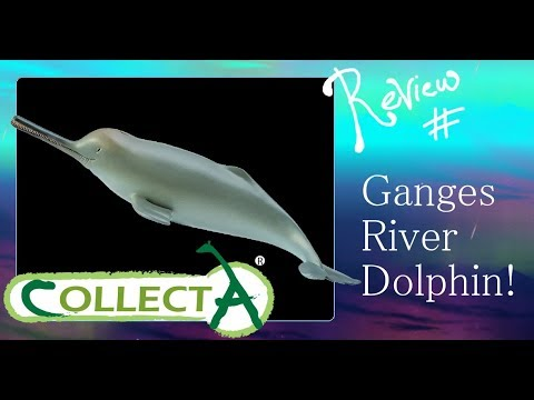 CollectA 2013 Ganges River Dolphin Review