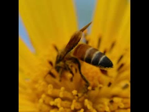 Strongest evidence yet that neonicotinoids are killing bees