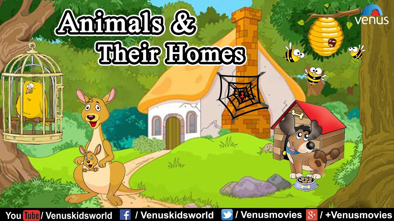 Animals & Their Homes !!