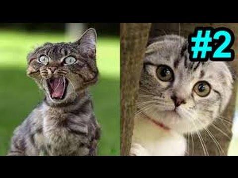 ● Kênh Hài ● Đọc Suy Nghĩ Mèo Và Chuột (Kì 2) ✔