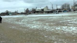 видео Состояние моря зимой черного моря