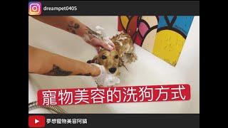 如何成為一位好的寵物美容助理 第二卷 洗澡篇 dog grooming | 夢想寵物美容115