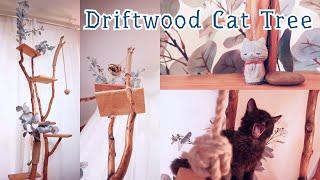 Making Driftwood Cat Tree for Kitten // Full Video // Instructional ASMR Music Video