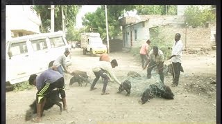 Karnataka: Kalaburagi City Corporation starts drive to catch stray pigs