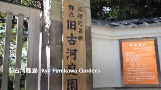 2013年9月16日撮影。 東京都北区にある旧古河庭園。元々は陸奥宗光の邸...