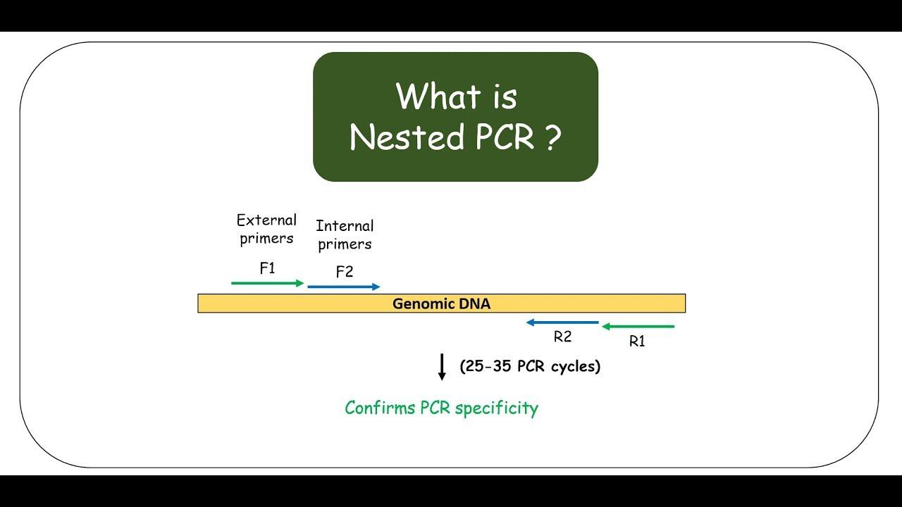 Nested PCR - YouTube