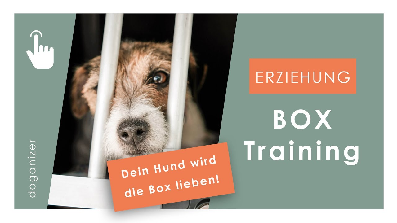 Hunde Box beibringen   Boxtraining   Eingewöhnung   Hundeerziehung