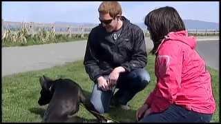 Vancouver Island Dog Rescue - Shaw Tv Nanaimo