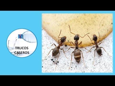 Como eliminar hormigas sin pesticidas doovi - Remedios caseros para eliminar hormigas en casa ...