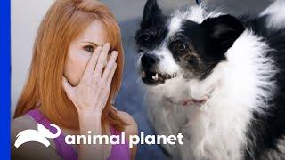 5 Unruly Pets Run Rampant | Cat vs. Dogs