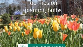 Top Tips on planting bulbs