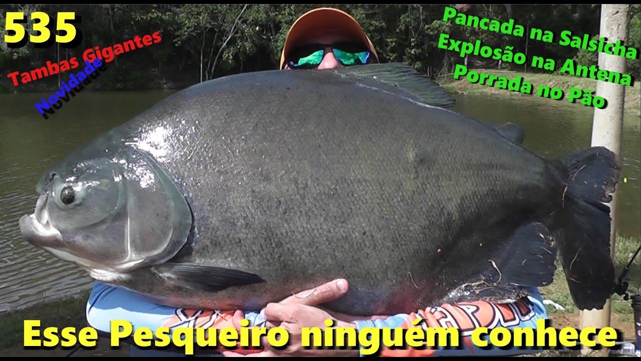 Cabelo - Mais um pesqueiro que descobrimos - Fishingtur na TV 535