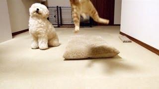 関連記事:http://bonpoodle.blog117.fc2.com/blog-entry-987.html 猫(...