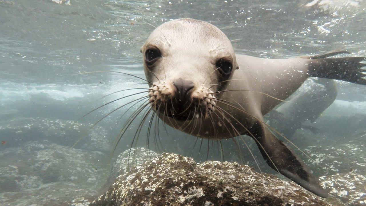 GoPro: Galápagos Sea Lions - YouTube
