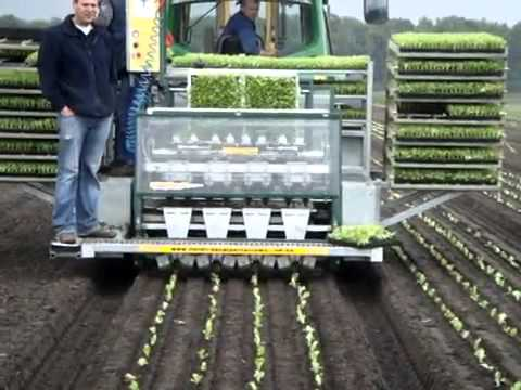Iceberg lettuce automatic seedling planter
