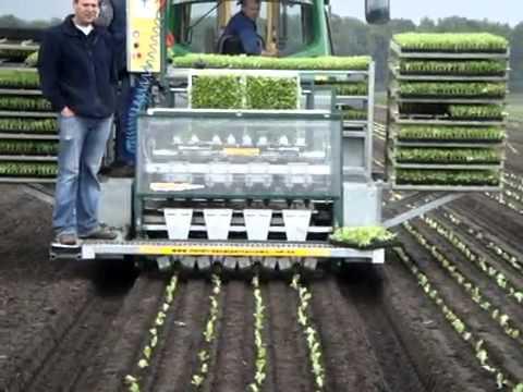 Iceberg Lettuce Automatic Seedling Planter Youtube