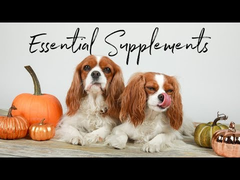 you-need-to-get-these-supplements-for-your-dog!