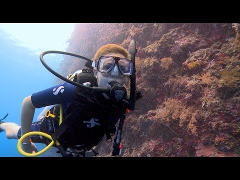 Crazy, Awesome Dive Lifestyle | PADI Youth Programs