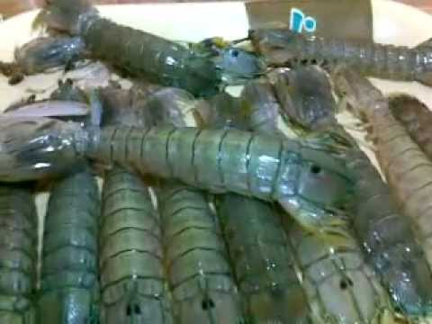 Mantis shrimp with butter and cheese recipe ( alupihang dagat)