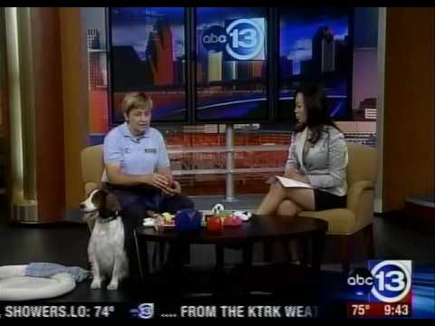 Back to School Tips - Bark Busters Dog Training - ...