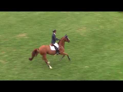 Video of HH CALLAS ridden by MCLAIN WARD from ShowNet!
