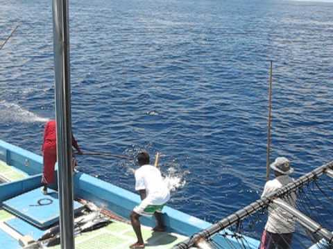 World biggest tuna catch  اكبر اماكن صيد التونه في العالم