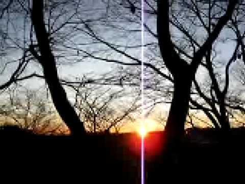 初日の出 2009年 木々