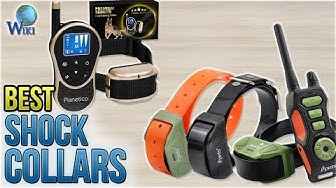 10 Best Shock Collars 2018