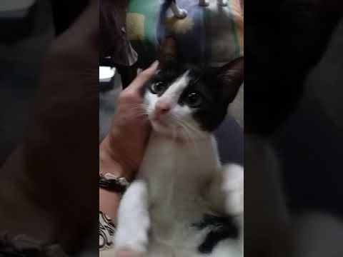 Goyang Kindi Bayi... Lagi Asyik Goyang, Kucingku Malah Marah 😁