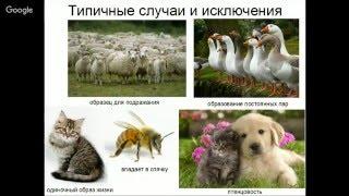 Человек и собака: одомашнивание или эволюция