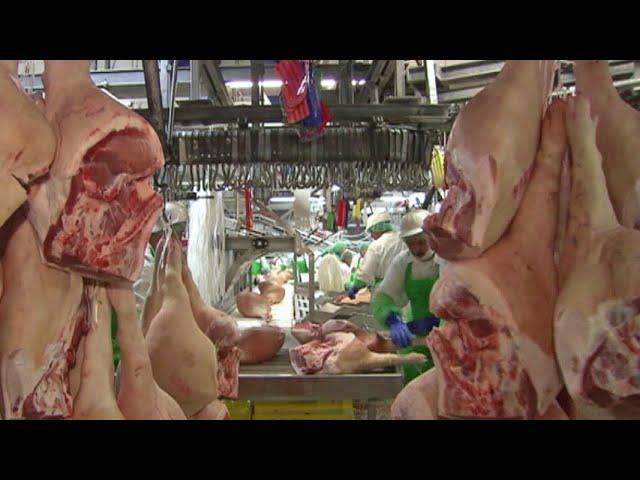 Gesetz blockiert: Weiter Leiharbeiter in der Fleischindustrie? | Panorama 3 | NDR