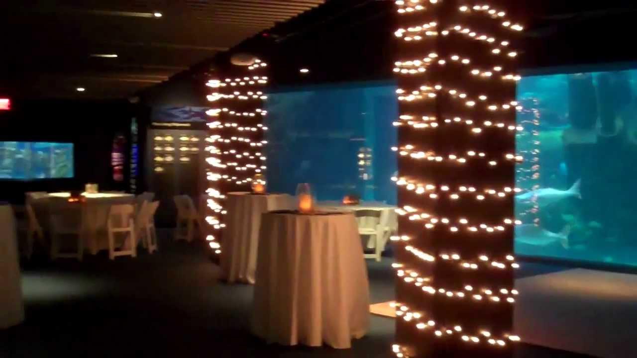 Reception Set Up At The Pine Knoll Shores Aquarium Youtube