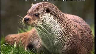 видео цікаві факти про тварин