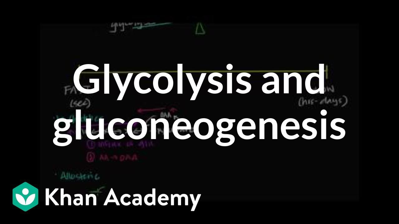 Regulation of glycolysis and gluconeogenesis (video)   Khan Academy