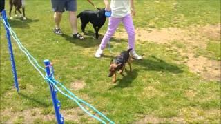 Willen Lake, Milton Keynes - Parks Trust Dog Show (2013)