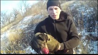Охота с ягдтерьером на лису в тупиковой норе 2017