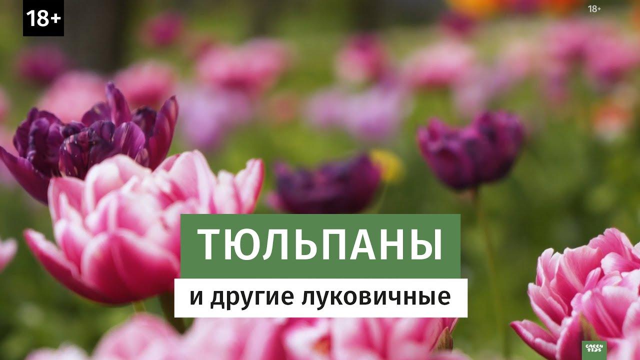 Тюльпаны и другие луковичные. 18+