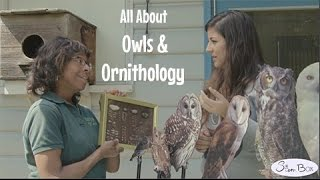 February Lesson: Owls and Owl Pellets