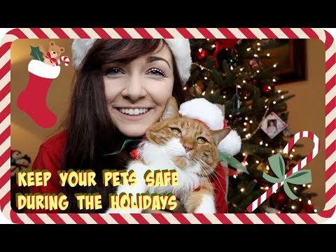 TIPS TO KEEP YOUR PETS SAFE DURING THE HOLIDAYS!