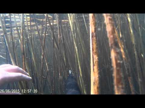 Подводная охота №3 озеро Парное