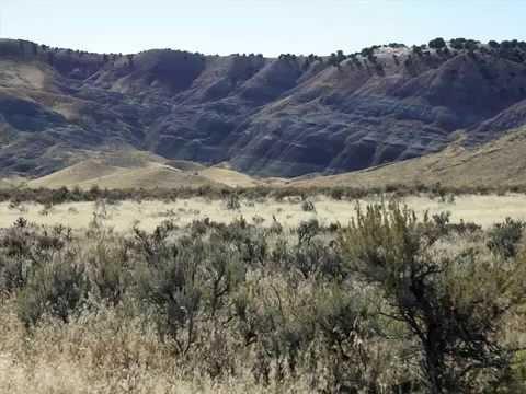 The Dry Mesa Dinosaur Quarry