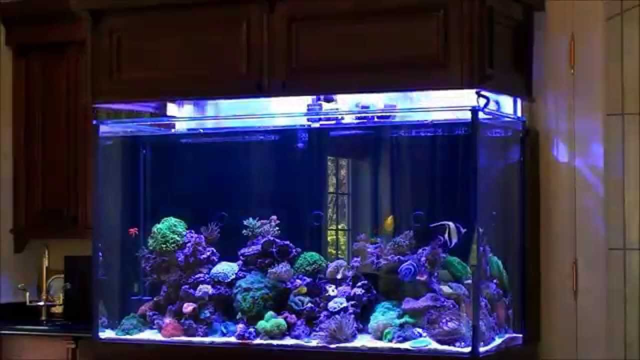 Don 39 S High Tech Custom Reef Tank YouTube