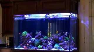 Don's High-tech Custom Reef Tank