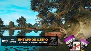 Русская Рыбалка 4 Стрим Ловля Карпов на Янтарном озере используя только Кукурузу