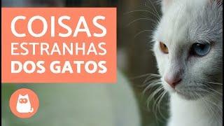 10 coisas estranhas que os gatos fazem