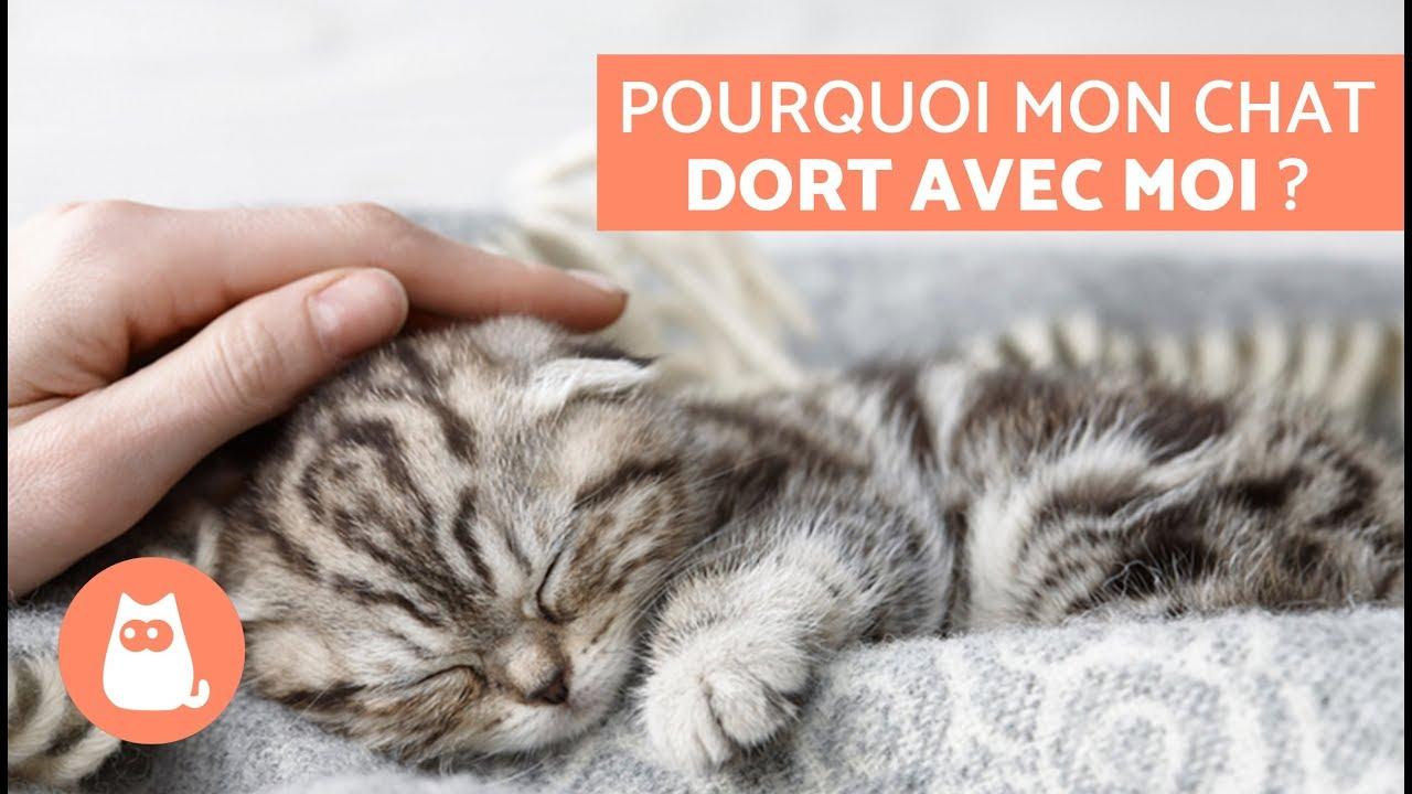 Mon Chat Dort Sur Mes Pieds pourquoi mon chat dort avec moi ? – 5 raisons que vous allez adorer !