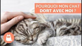 Pourquoi mon chat dort avec moi ? – 5 raisons que vous allez adorer !