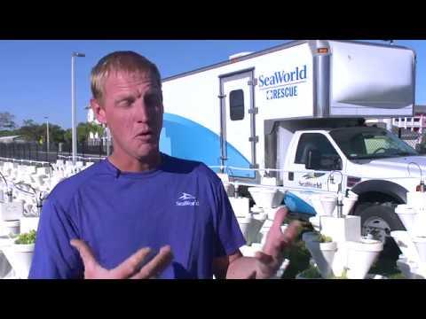 Millennia Gardens Elementary Donates Lettuce To Seaworld S Manatee Rescue Youtube